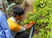 Chiapas : el acceso a la seguridad alimentaria